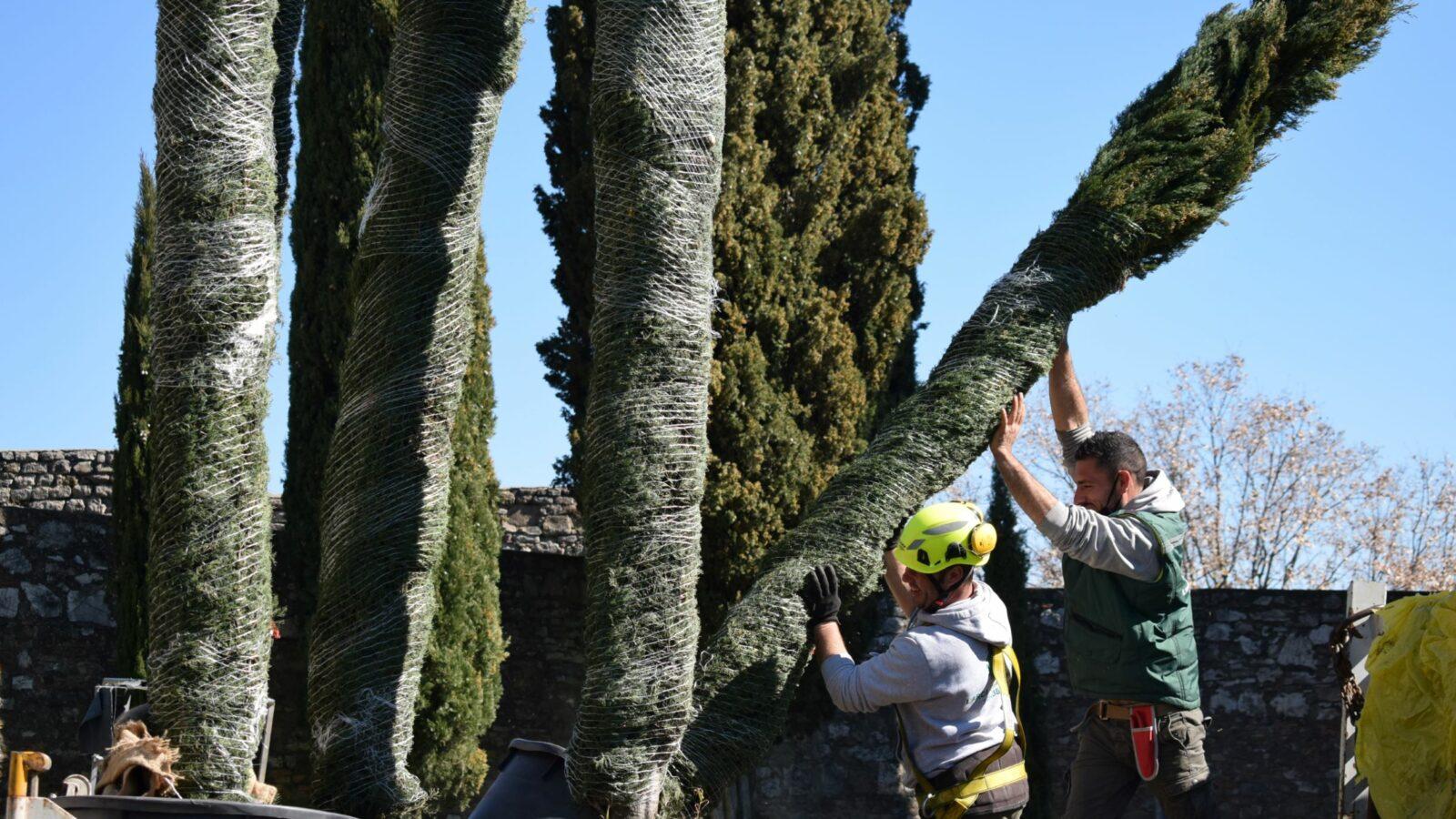 weTree: l'occasione italiana per parlare il linguaggio degli alberi