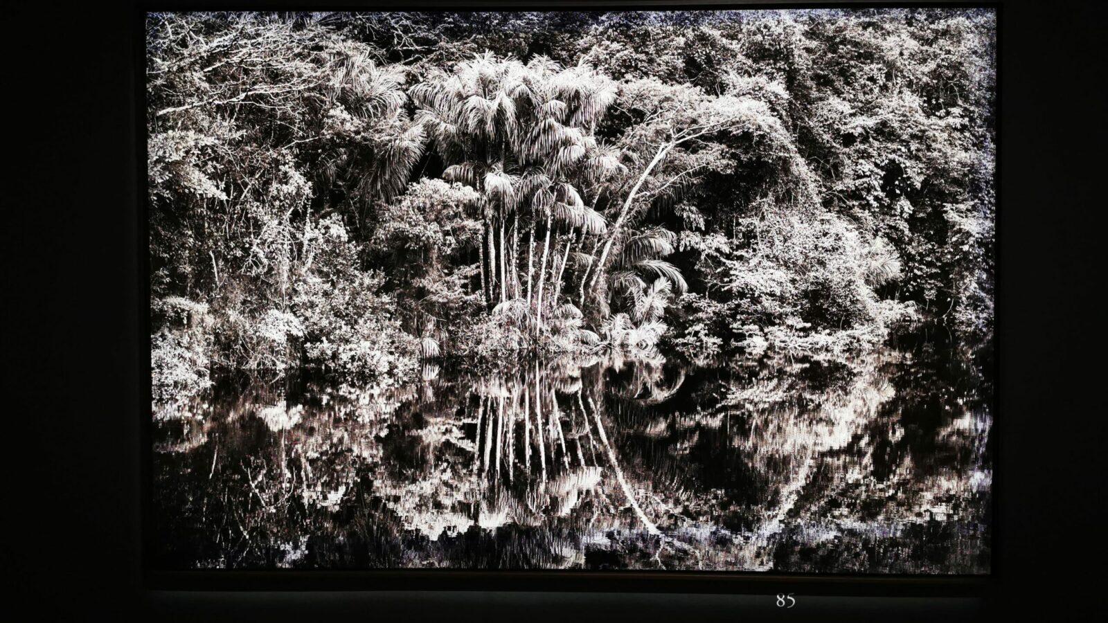 Sebastião Salgado, l'Amazzonia in mostra a Roma